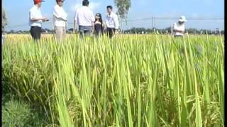 SRI news: Large-scale field in Binh Dinh province