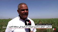 ارتفاع محاصيل الزراعات السكرية في منطقة الغرب