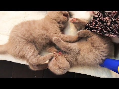 Funny Kittens Playing 😍😍 Cute Kittens Overload (Part 1) [Funny Pets]