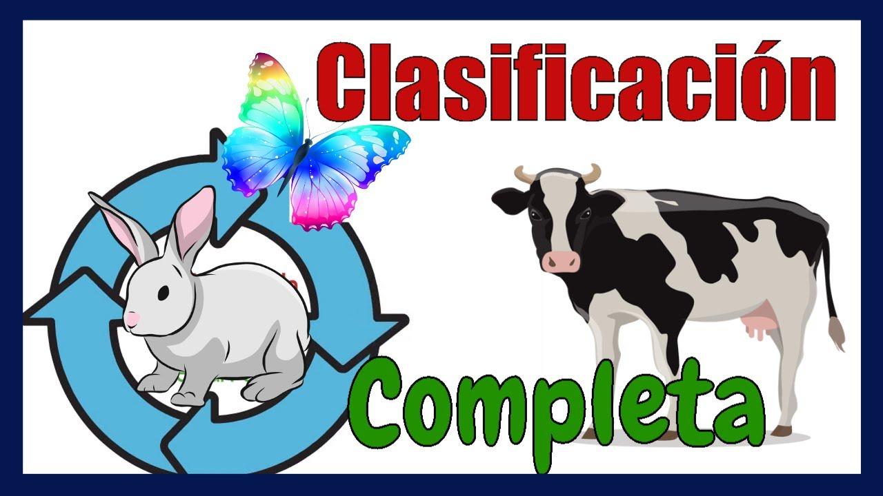 Clasificación De Los Animales Según Su Alimentación Hábitat Reproducción Y Esqueleto Youtube