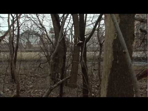 Chicago Park District March 2013: Burnham Wildlife Corridor
