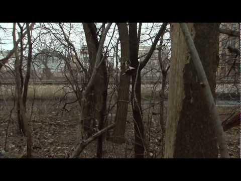 Chicago Park District March 2013: Burnham Wildlife Corridor