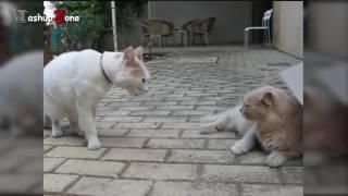 lucu banget monyet vs kucing