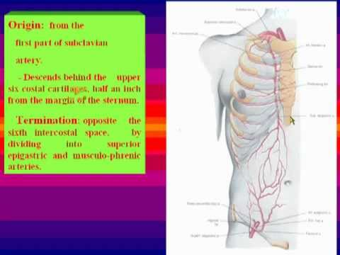 14- Internal mammary artery - YouTube