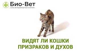Видят Ли Кошки Призраков И Духов & Почему Кошка Смотрит В Пустоту. Ветклиника Био-Вет