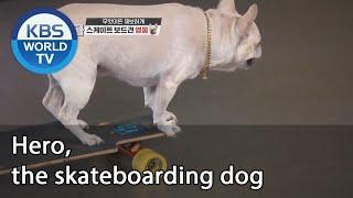 Hero, the skateboarding dog (Dogs are incredible) | KBS WORLD TV 201007