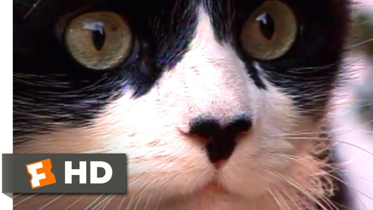 A Cat's Tale (2008) - Cats in Love Scene (10/10) | Movieclips