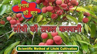 Scientific Method of Litchi Cultivation |  लीची की सफल बागवानी | Tips for Profitable Farming
