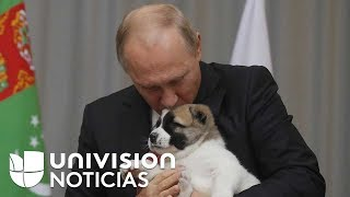 Verny, el cachorro que el presidente de Turkmenistán regaló a Putin por su cumpleaños