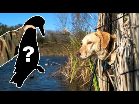 Shooting A RARE Duck! - Duck Hunting Opening Day 2017