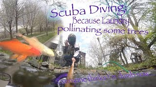 Scuba diving because laundry..  Pollinating some trees..   Everyone thinks I'm dumb now...