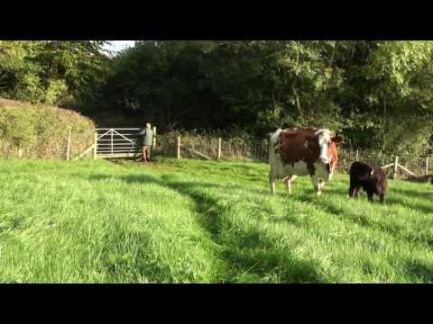 Charlie's Organic Dairy Farm