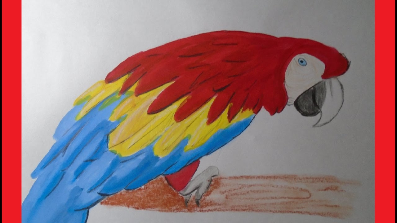 112 Guacamaya a colores - Damanuve - YouTube
