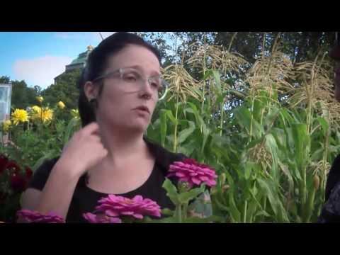 Naturligt urval -så går det till när växterna och blommorna väljer . Växtförädling