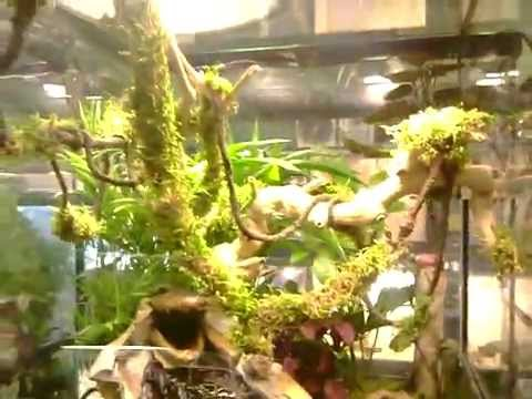 U0027Gator Mouthu0027 Living Terrarium By Xavier Truesdell   YouTube