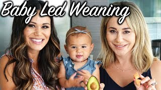 Baby Led Weaning - All You Need to Know ft. Brandi Milloy
