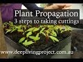 Propagation from Cuttings