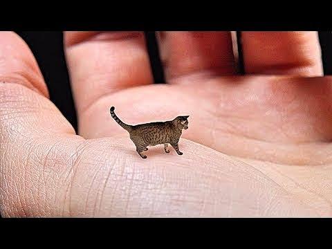 9 Самых Маленьких Животных в Мире