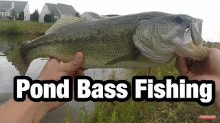 Pond Bass Fishing for Giants or Dinks?!?!
