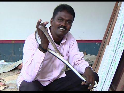 Vava Suresh Snake Hunting caught a Long Trinket Snake in Kerala | SNAKE MASTER EPI 163 1/2