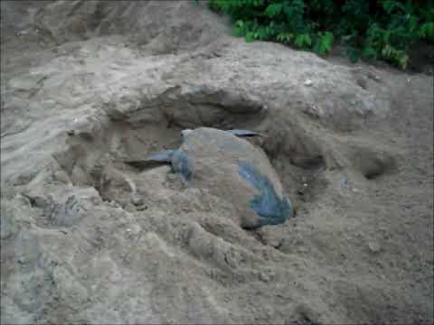 Ilheu de Poilão, berço da tartaruga verde