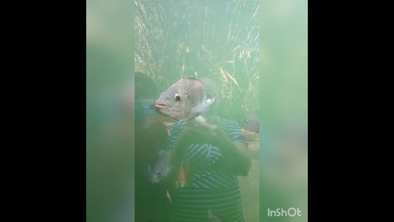 Apresentando os animais,do zoológico de Bauru, SP 💚🐒