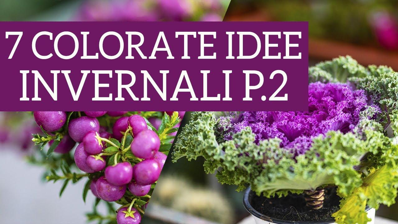 Piante Erbacee Perenni Da Ombra 7 piante da interno per ombra e mezzombra - vendita piante