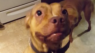 Guy Proves That His Dogs Understand English | What's Trending Now