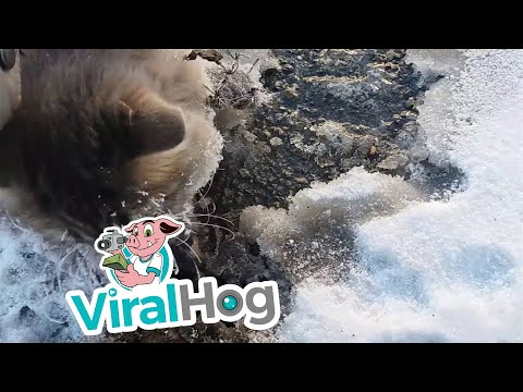 Thumbnail: Frozen Kitty Gets Second Chance