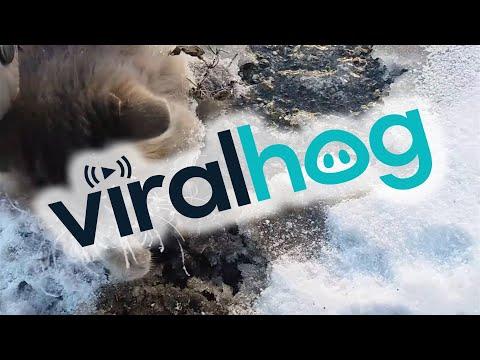 Frozen Kitty Gets Second Chance || ViralHog