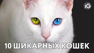 10 САМЫХ красивых кошек мира