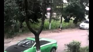 трах собак(трахуют собаку., 2014-09-14T08:35:03.000Z)