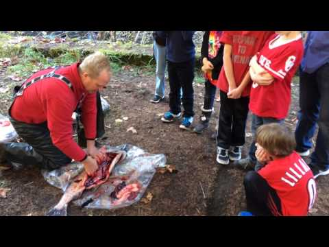 Salmon Dissection For Kids, (Fish Hatchery Lesson)