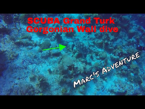 SCUBA Grand Turk Gorgonian Wall dive - Sea Turtle