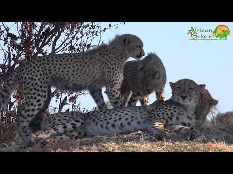 Journey To Botswana (2019) - Safari 1
