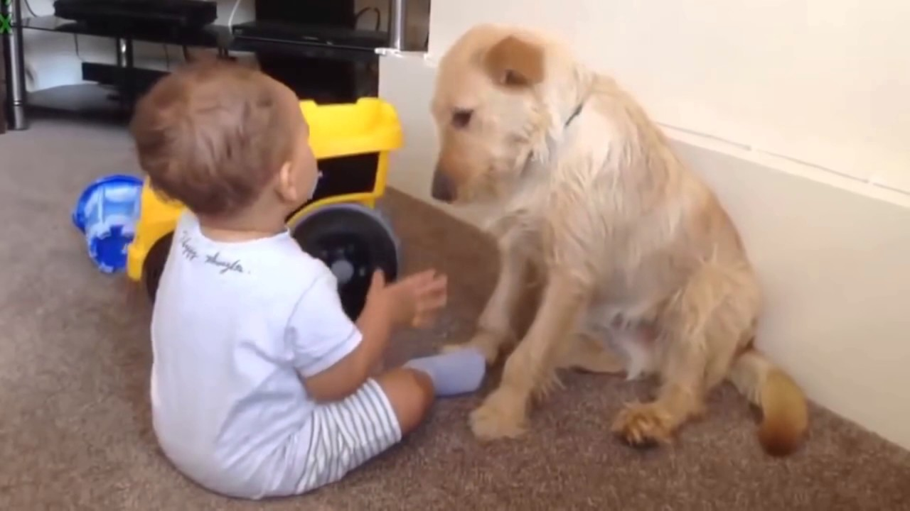 Uncategorized Funny Videos Of Animals For Kids best babies and animals compilation 2017 funny kids videos part 1 2017