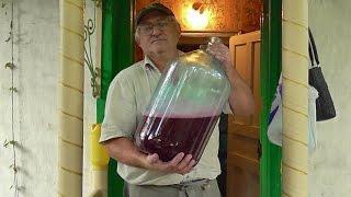 Вино из синего винограда. Сусло из мезги. Вино Альфа (3)