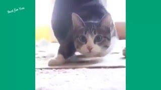 Смешни котки. МНОГО СМЯХ! 2015
