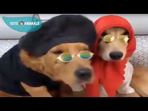 Tik Tok Cat, Dog, Animals: Funny Cute Pets Compilation #19