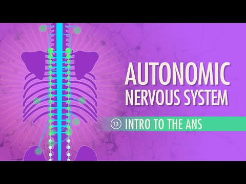 Autonomic Nervous System: Crash Course A&P #13
