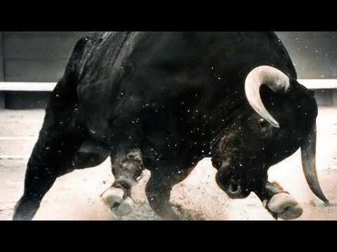 End of the Stupid Bull Run