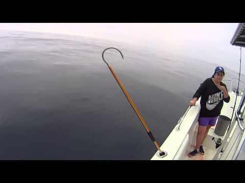 Dana point fishing double hookup on dorado youtube for Fish count dana point