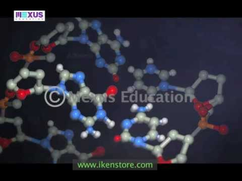 DNA - Origin, Structure and Properties