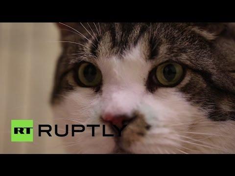 В Германии появился претендент на звание самого толстого кота в мире