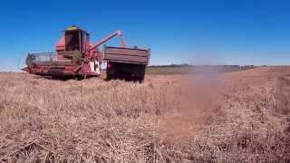 Kūlimas 2015|Žniwa 2015|Harvest 2015|