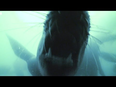 Up Close with the LETHAL Teeth of a Sea Lion | Earth Unplugged