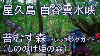 屋久島 白谷雲水峡(前半)苔むす森  トレッキングガイド