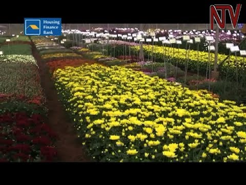 Government gives two flower firms licenses to develop special export zones