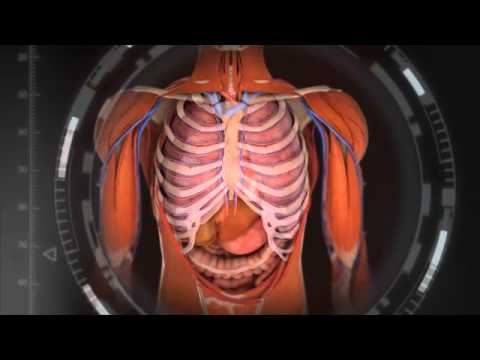 FLVS Anatomy and Physiology Overview - YouTube