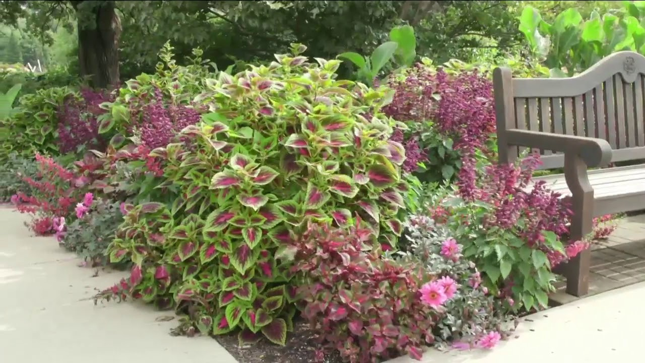 Melinda S Garden Moment Creating A Colorful Coleus Inspired